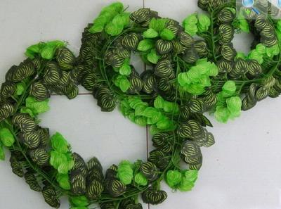 西瓜的照片手工边框装饰图片