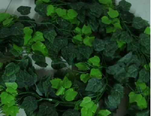 爬室内墙上绿叶植物